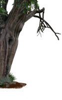 Creepy Old Tree Side PNG.. by WelshDragonStockNArt