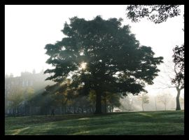 Morning Mist by amyhooton