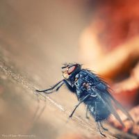 Little Creatures 091 by Frank-Beer