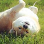 Chilling in the Grass by marustagram