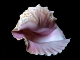 Stock Seashell by E-DinaPhotoArt