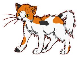 ThunderClan - Mapleshade by WildpathOfShadowClan