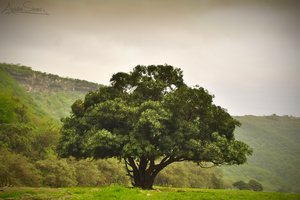 The Tree of Life by A-Shamsi