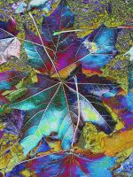 Leaves solorised by vandalised