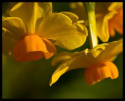 daff a l'orange by justfrog
