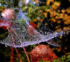 water drops by KariLiimatainen