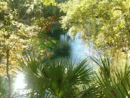 Florida Springs by Corrynanin