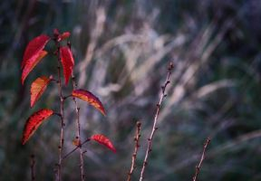 red autumn I by NicolasM