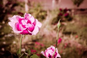 Blooming Flower by zooz898