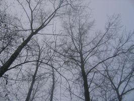 Branches by Chick-with-a-pencil