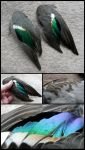 Eurasian Teal Wings by CabinetCuriosities