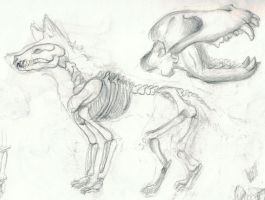 Canine Skeletal Study by lifanonline