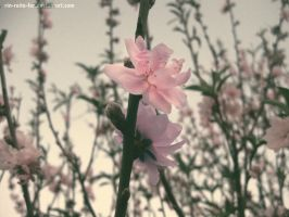 two sides of one branch by RIN-reita-for