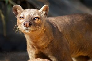 Fossa! by DeniseSoden