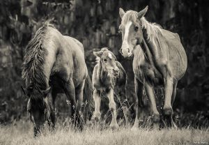 Happy Family by *AnneMarks