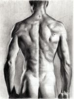 Another back study by AbdonJRomero