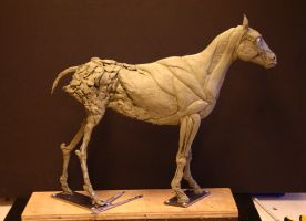 Horse Ecorche - Day 9 by aerie-