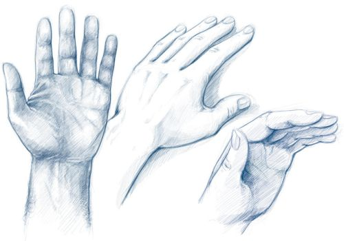 hand studies sketches by pingueustein