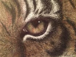 Eye of the Tiger by MChaseStudio