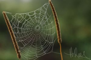Webbed by Shes-All-Smiles