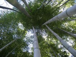 Bamboo by dancincow161