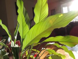 the leaves of a houseplant by CanadianThunder