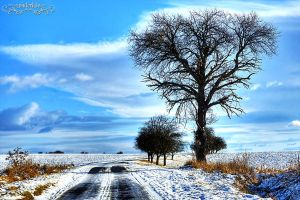 winter road2 by Wintertale-eu