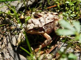 Toad in sunlight by Mauvecloak