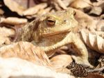 Toad 4 by toldeanQ