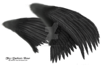 Dual Black Wings - LARGE PSD by Thy-Darkest-Hour