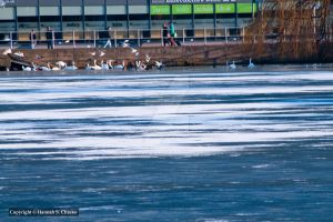 Icy waters 2 by HSChacko