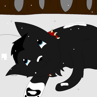 Scourges 1st snow by KittenLove1035