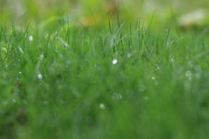 Grass by isoscelesrectangle