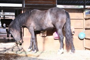 black horse stock 1 by xbr0kendevotion