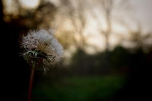The Wind of Change by waldrose