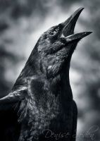 Call of the Crow by DeniseSoden