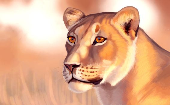 Lioness portrait by Denece-the-sylcoe