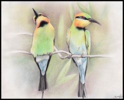 Rainbow bee-eaters - commission by be-a-sin