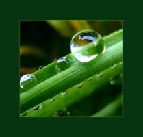 A single drop of water by blessedchild