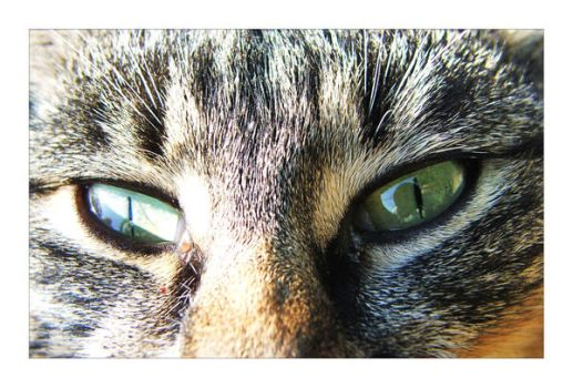 Eyes of a Cat by amissguidedstarstock