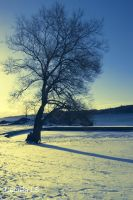 Tree and snow by CareBear1993