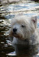 dog in the Stort 2 by Rhoehypnol