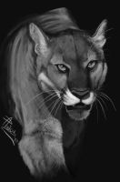 Mountain Lion Greyscale by RogueLiger