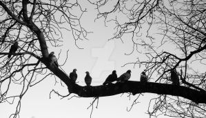 Roost by lonesomeaesthetic