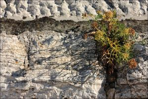 The Wall by siskin