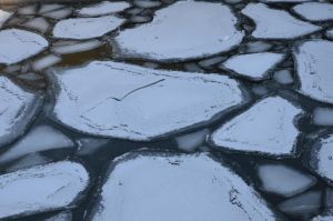 more floes by mimose-stock