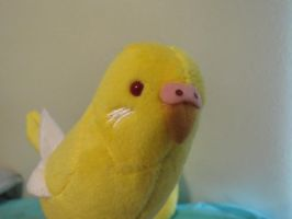Little yellow budgie plush close by Sorath-Rising