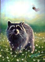 My Pet Racoon Rocky by carefulwhatyawishfor