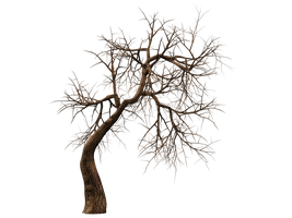 Trees 10 PNG Stock by Roys-Art