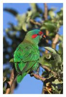Parrot CRW_5289-01 by Dyer-Consequences
